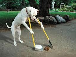 Perro limpio